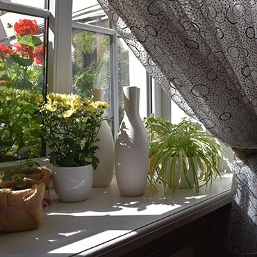 Blumen auf der Fensterbank